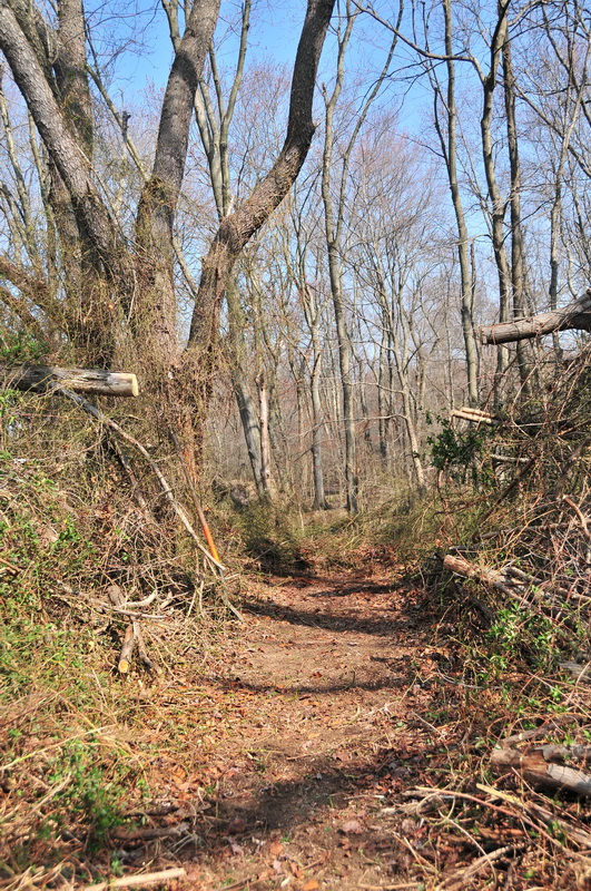 cut limbs, new trail, single track, woods, Mercer County Park, JORBA Trail Day, March 2012