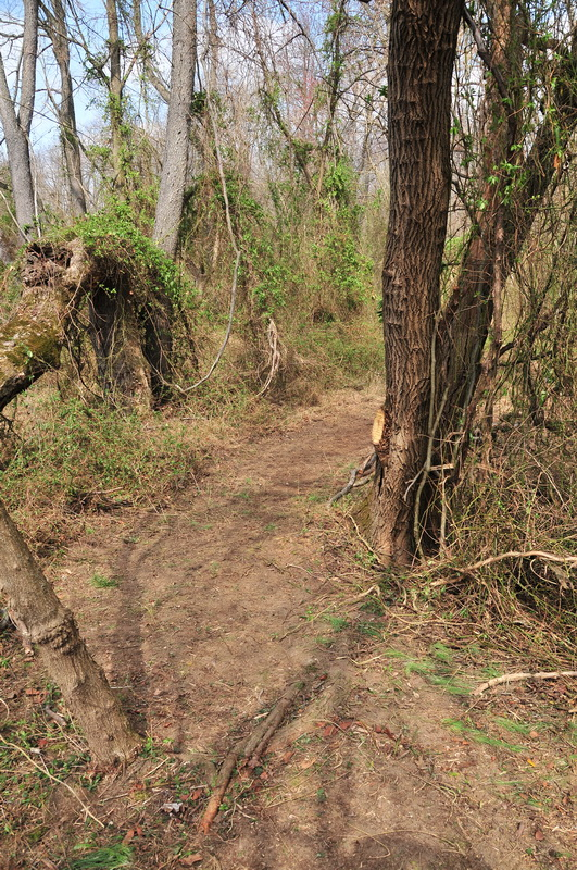 dirt trail, enw trail, trees, vines, woods, Mercer County Park, JORBA Trail Day, March 2012