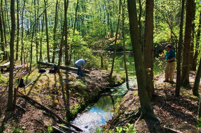 leaves, pull, rope, spring, stream, trail maintenance, trees, volunteer, water, woods