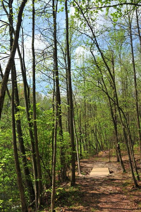 bridge, spring, trail, trees, volunteer, woods