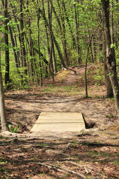 bridge, spring, trail, trees, volunteer